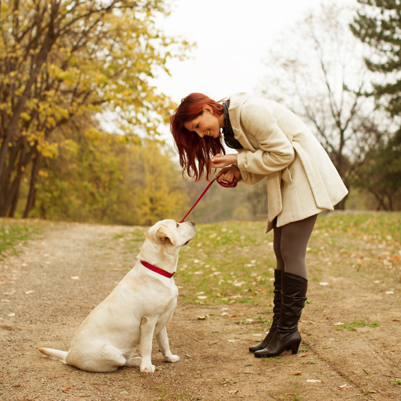a-young-woman-training-a-labrador-puppy-to-sit-at-a-park